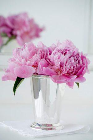 Peonies in silver vase